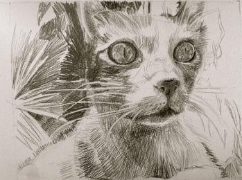 Portrait au crayon du chat de Georges et Cécille